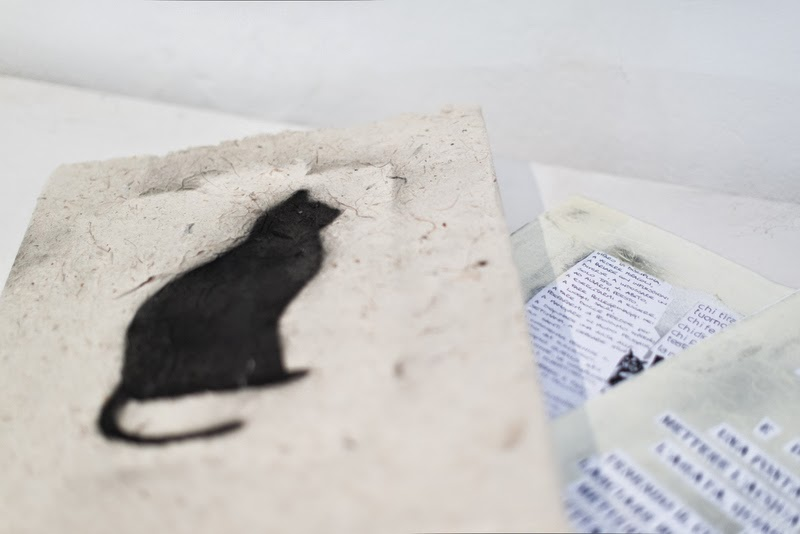 img gatto nero 8