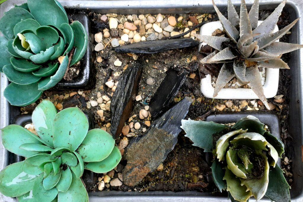 foto piante